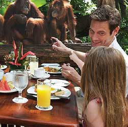 Breakfast with the Orangutans
